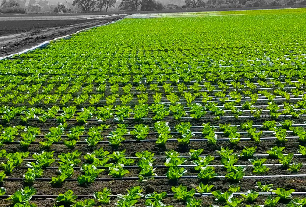 Mexichem Buying Majority Stake In World S Largest Drip Irrigation Company