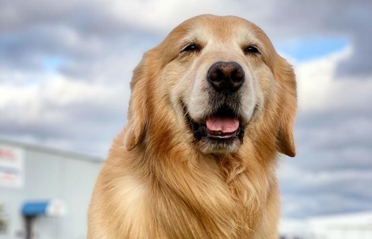 Kickstart: Who's a good boy?